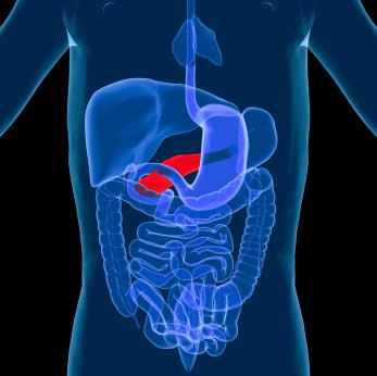 Digestive-system-pancreas